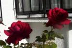 Flores de Irene Abedrapo